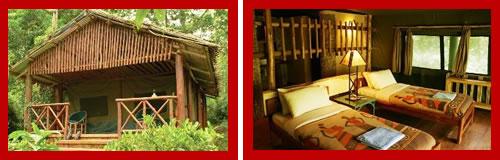 http://www.kenyawalk.com/images/body/kibale-forest.jpg